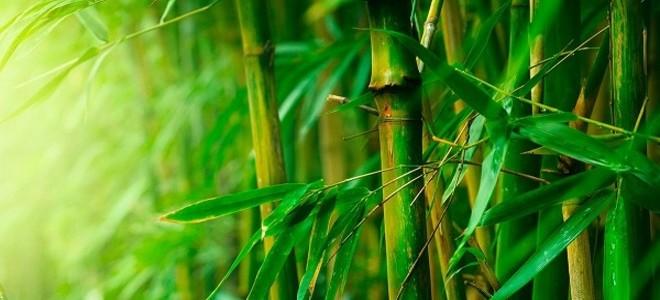 Бамбуковая ткань — что это такое, состав и свойства