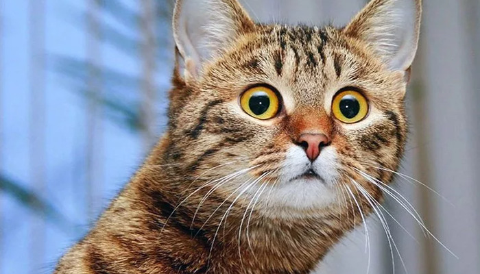 Кот смотрит с удивлением