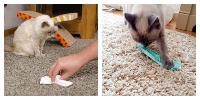 Кот и ковер