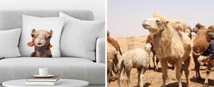 Верблюды и подушка