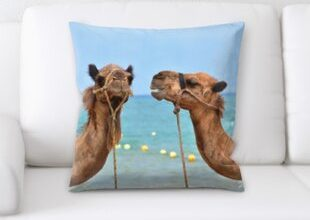 Фото верблюдов на подушке