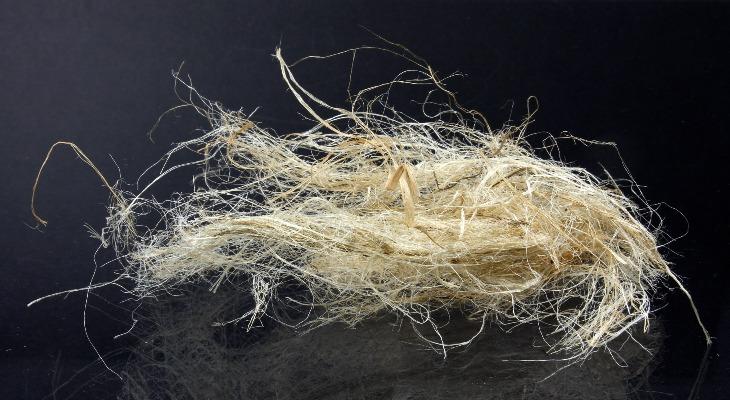Волокна растения рами